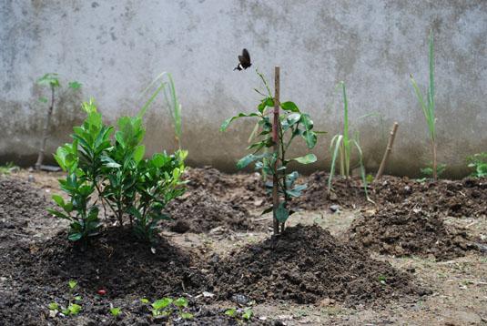herbs-garden0020house.jpg