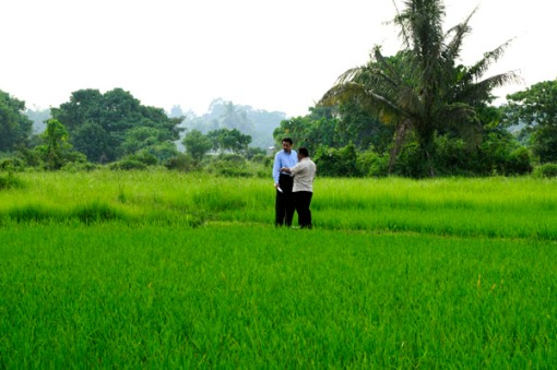 Paddy Field Evening_0002
